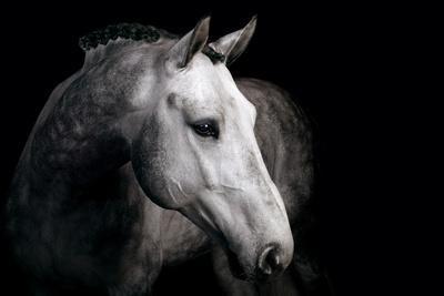 https://imgc.artprintimages.com/img/print/horse_u-l-pzrug40.jpg?p=0