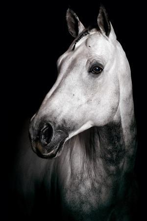 https://imgc.artprintimages.com/img/print/horse_u-l-pzrv4p0.jpg?p=0