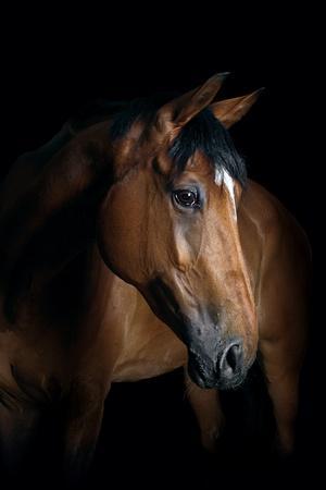 https://imgc.artprintimages.com/img/print/horse_u-l-pzrzl80.jpg?p=0