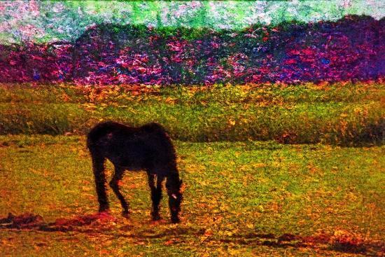Horse--Photographic Print