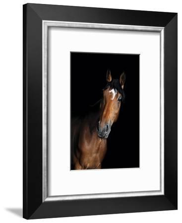 Horse-Fabio Petroni-Framed Photographic Print