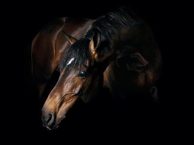 Horse-Fabio Petroni-Photographic Print