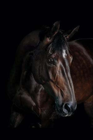 https://imgc.artprintimages.com/img/print/horse_u-l-pzs3cl0.jpg?p=0