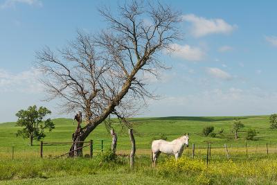 Horse-Hank Shiffman-Photographic Print