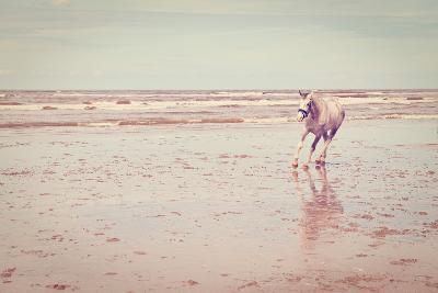 Horse-gkuna-Photographic Print