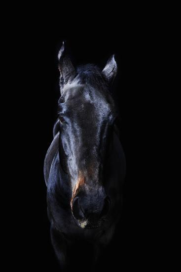Horse-Yusuke Murata-Photographic Print