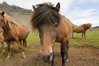 Horse- tonda55-Photographic Print