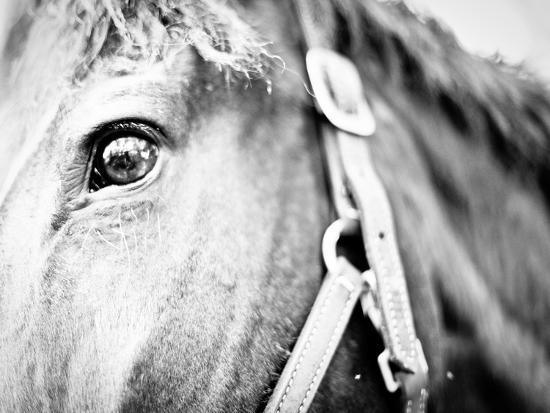 Horseback Riding I-Susan Bryant-Photographic Print