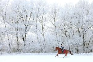 Woman and Her Horse Cantering in Fresh Snow in Christmas Morning by horsemen