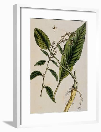 Horseradish-Elizabeth Blackwell-Framed Giclee Print
