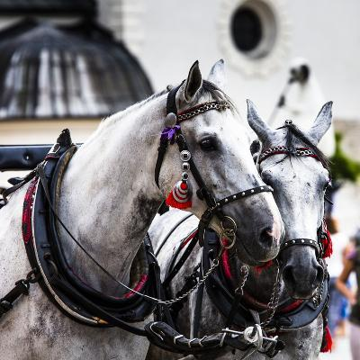 Horses and Carts on the Market in Krakow, Poland.-Curioso Travel Photography-Photographic Print