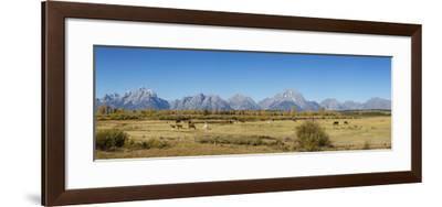 Horses and Grand Teton Mountain Range in fall, Grand Teton National Park, Wyoming-John & Lisa Merrill-Framed Photographic Print