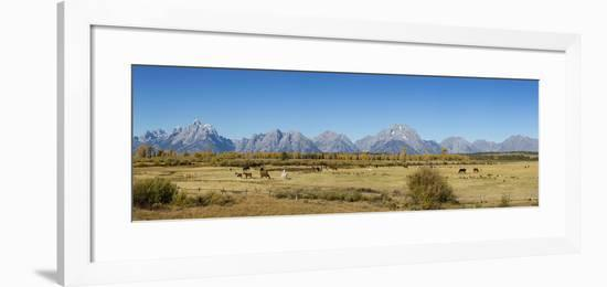 Horses and Grand Teton Mountain Range in fall, Grand Teton National Park, Wyoming-John & Lisa Merrill-Framed Photographic Print
