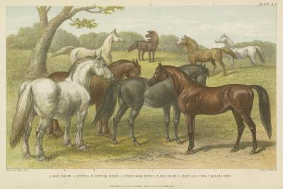 Horses and Ponies--Giclee Print