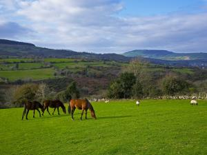 Horses and Sheep in the Barrow Valley, Near St Mullins, County Carlow, Ireland