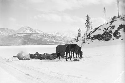 Horses and Sledge in the Klondike--Photographic Print