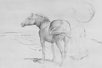 Horses at Coolmore, 1990-Antonio Ciccone-Giclee Print