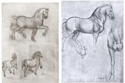 Horses, C1490-1510-Leonardo da Vinci-Giclee Print