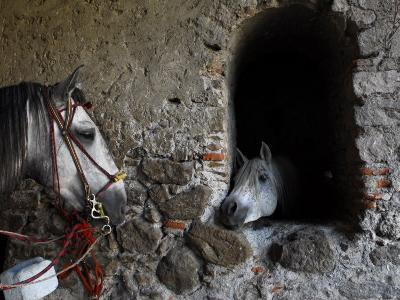Horses Eyeing One Another Through a Window in a Stone Wall-Raul Touzon-Photographic Print