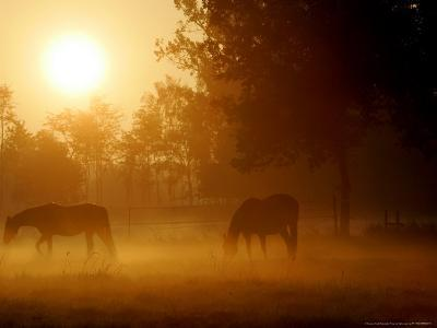 Horses Graze in a Meadow in Early Morning Fog in Langenhagen Near Hanover, Germany, Oct 17, 2006-Kai-uwe Knoth-Photographic Print