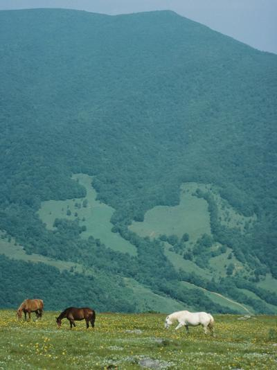 Horses Graze on Big Yellow Mountain, Appalachian Mountains, North Carolina-Sam Abell-Photographic Print
