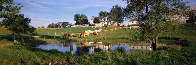 Horses Grazing at a Farm, Amish Country, Indiana, USA--Photographic Print