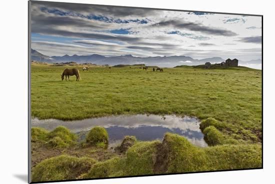 Horses Grazing by Abandon House, Vidbordssel Farm, Hornafjordur, Iceland-Arctic-Images-Mounted Photographic Print