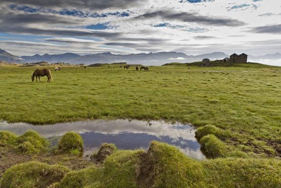 Horses Grazing by Abandon House, Vidbordssel Farm, Hornafjordur, Iceland-Arctic-Images-Photographic Print