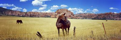 Horses Grazing in a Meadow, Kolob Reservoir, Utah, USA--Photographic Print