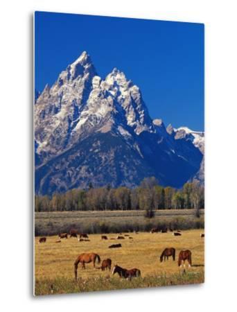 Horses Grazing near Teton Range