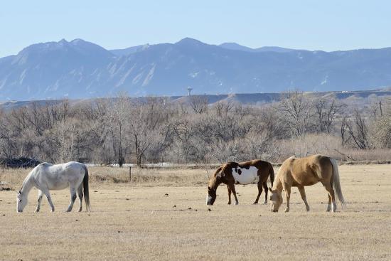 Horses Grazing-RiverNorthPhotography-Photographic Print