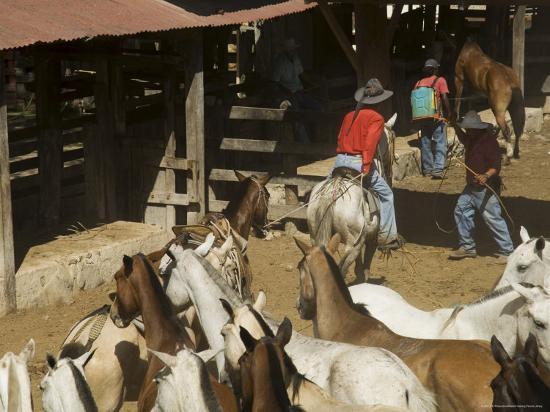 Horses, Hacienda Guachipelin, Near Rincon De La Vieja National Park, Guanacaste, Costa Rica-R H Productions-Photographic Print