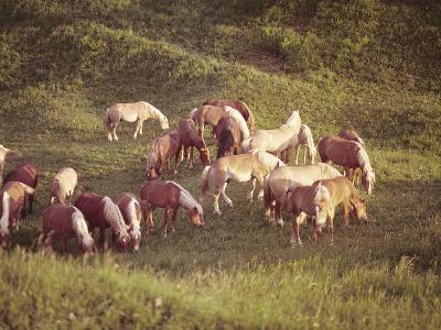Horses, Haflinger, Meadow-Thonig-Photographic Print