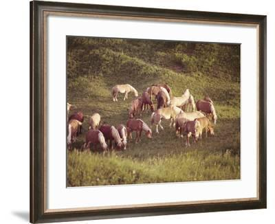 Horses, Haflinger, Meadow-Thonig-Framed Photographic Print