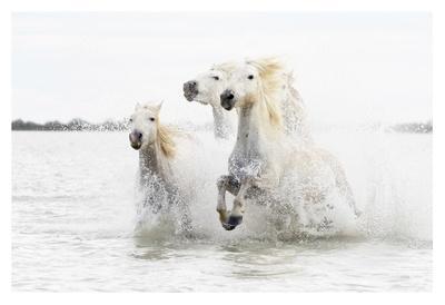https://imgc.artprintimages.com/img/print/horses-hight-key_u-l-f8wjva0.jpg?p=0