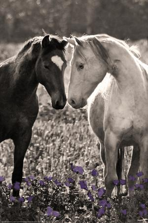 https://imgc.artprintimages.com/img/print/horses-i_u-l-pinuqn0.jpg?p=0