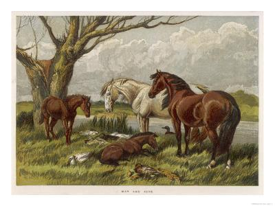 Horses in a Field--Giclee Print