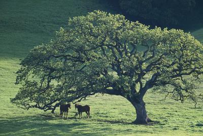 Horses in a Pasture-DLILLC-Photographic Print