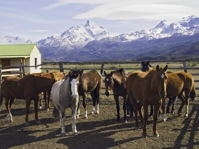 Horses in Corral at Estancia Cristina, Lago Argentino-Grant Dixon-Photographic Print