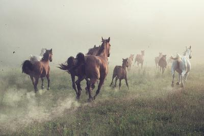 Horses in Dust-conrado-Photographic Print