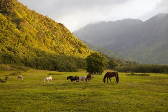 Horses in Field,Haena,Kauai,Hawaii-Marc Romanelli-Photographic Print
