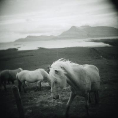 Horses in Pasture--Photographic Print