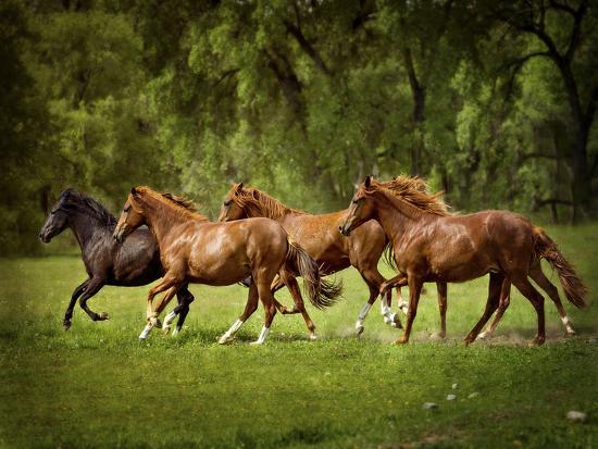 Horses in the Field III-Ozana Sturgeon-Photographic Print