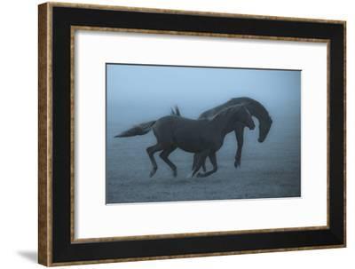 Horses In The Fog-Allan Wallberg-Framed Giclee Print