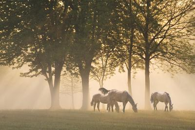 Horses in the mist-Monte Nagler-Photographic Print