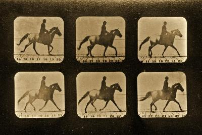 Horses. Irregular, 'Animal Locomotion' Series, C.1881-Eadweard Muybridge-Giclee Print