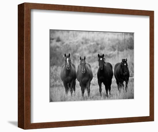 Horses, Montana, USA-Russell Young-Framed Photographic Print