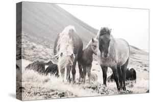 Horses of Hofn I BW