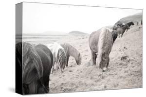 Horses of Hofn II BW