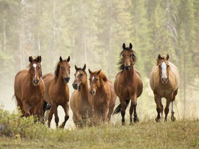 Horses on Ranch in Montana During Roundup-Adam Jones-Photographic Print